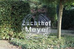 Zuchhof Meyer in Ermke